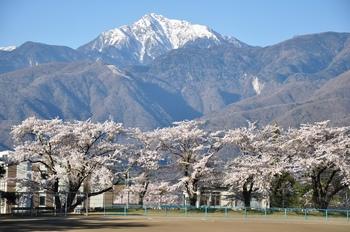 小淵沢ー帝京第3高校の桜.jpg