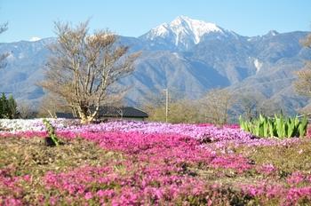 小淵沢ー甲斐駒と芝桜.jpg