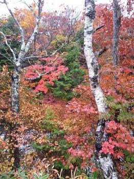 湯滝上の紅葉IMG_1760.JPG