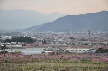甲府盆地の桃.jpg
