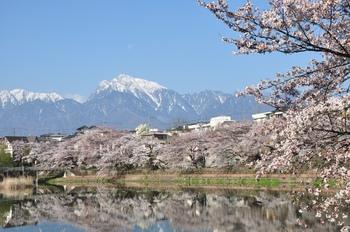甲斐駒と桜(長坂湖).jpg